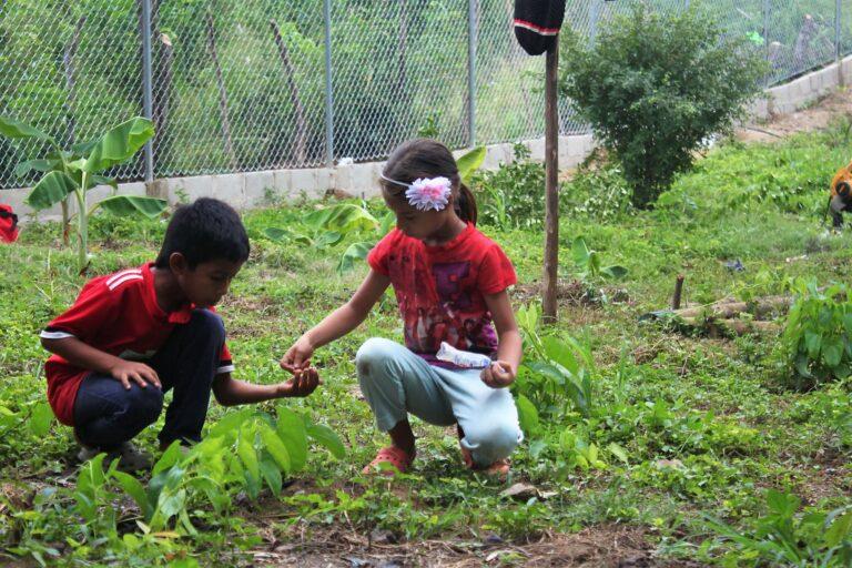 Plantation d'aubergines, de maïs, d'anone et de concombres